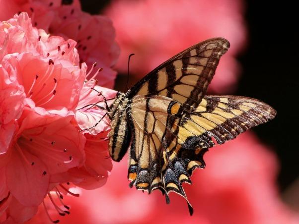 butterfly-108616_1280
