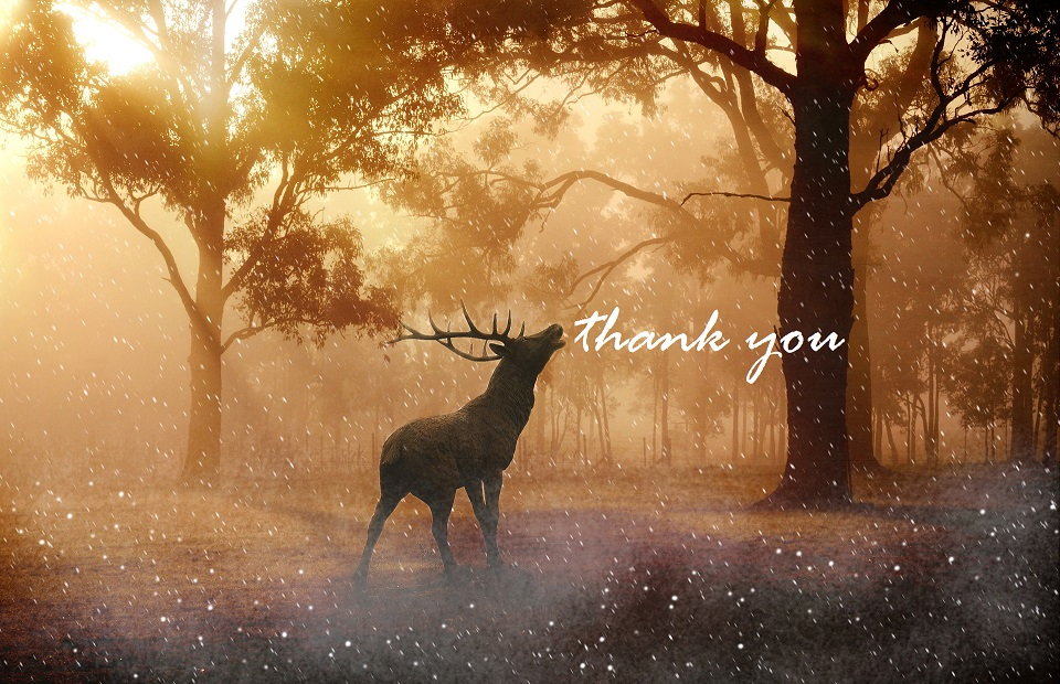 thank you stag - 50% resize