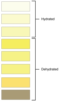 2601_Urine_Color_Chart